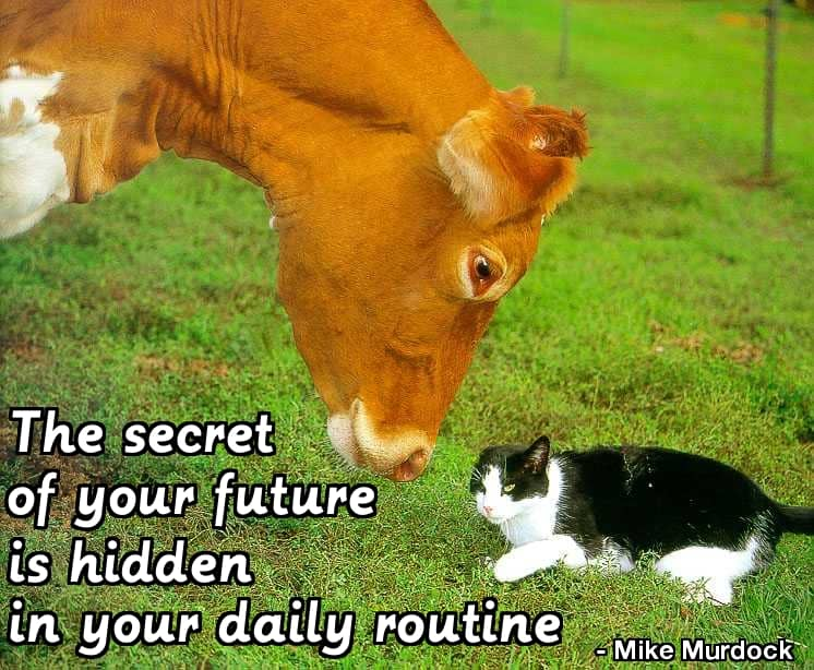 "Cow and Cat, plus ""The secret of your future is hidden in your daily routine."" - Mike Murdock"