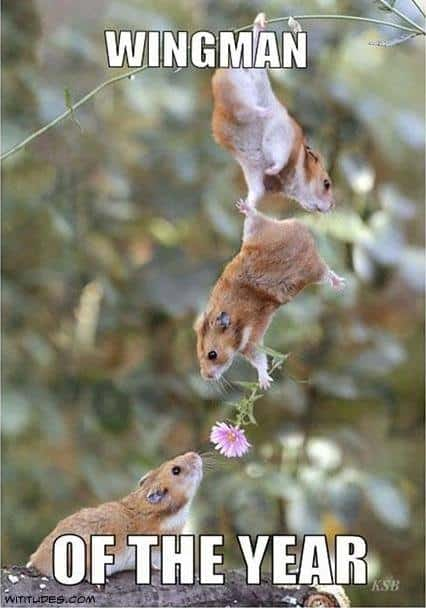 Three romancing mice, plus: Wingman of the Year
