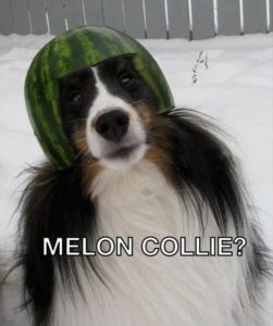 melon-collie