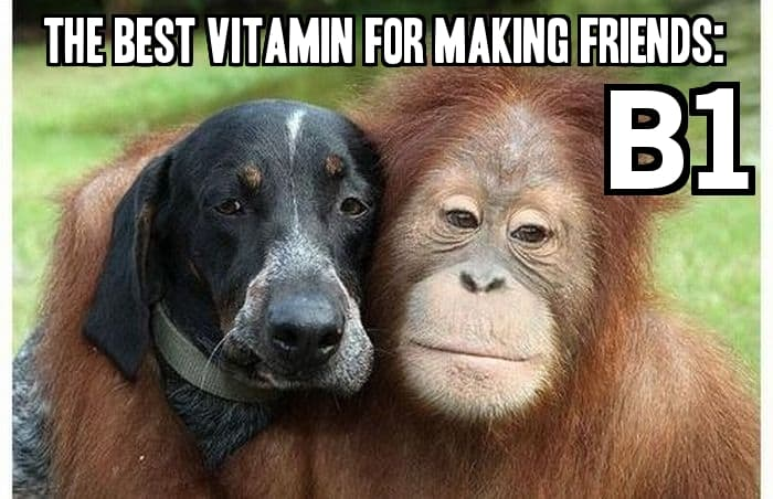 "Dog and Chimp, plus: ""The best vitamin for making friends: B1"""