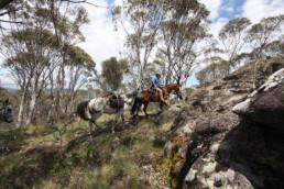 seniors riding horses